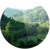 Rijstvelden | Wanddecoratie | 100CM x 100CM | Schilderij | Foto op plexiglas | natuur | Landschappen