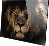 LEEUW OP PLEXIGLAS | Leeuw | Lion | Plexiglas | Foto op plexiglas | Wanddecoratie | 150 CM x 100 CM | Schilderij | Aan de muur | Dieren | Natuur