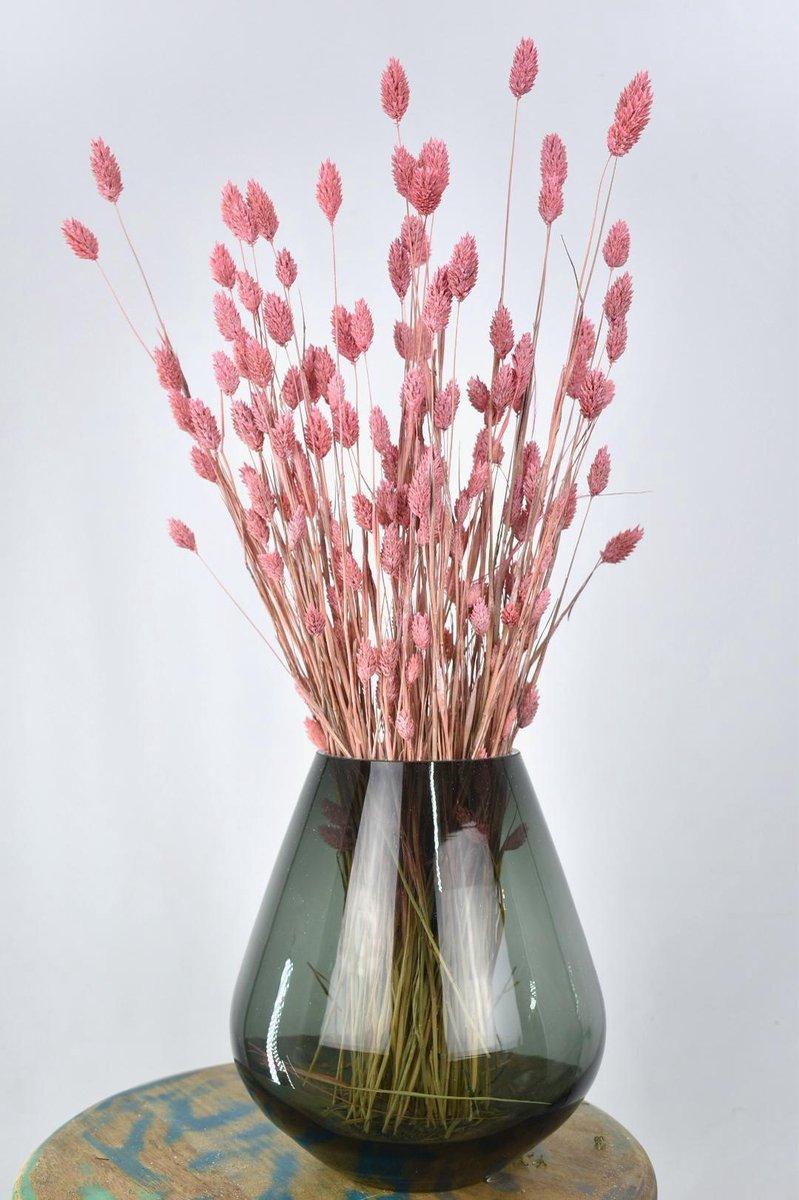 Droogbloemen Phalaris licht roze - Kanariegras - 60 cm - Natuurlijk Bloemen