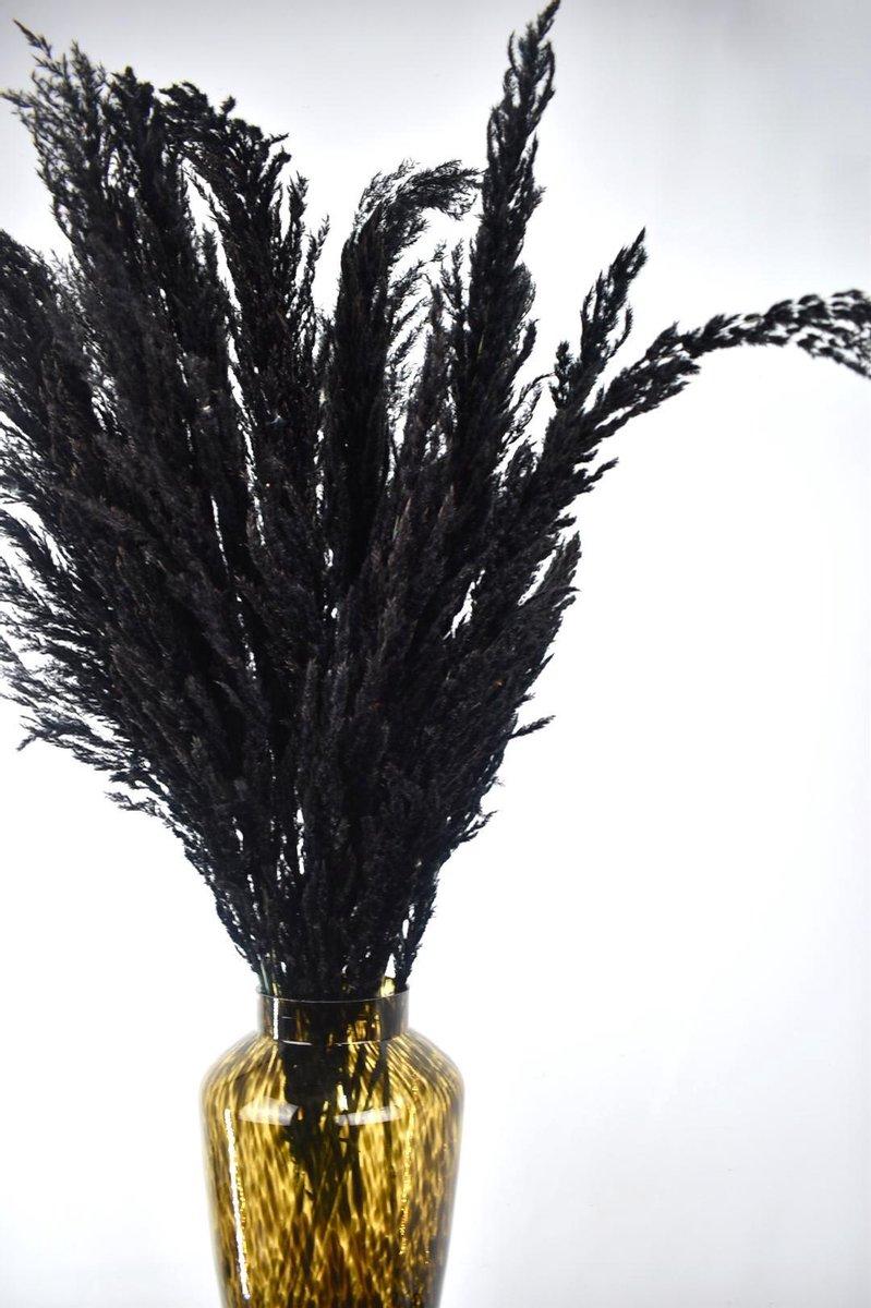 Pampas pluimen   Zwart   7 stuks   90 - 100 cm   Droogbloemen