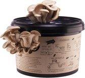 Oesterzwam kweekset - Zelf paddenstoelen kweken op koffiedik -Duurzaam cadeau - Kado