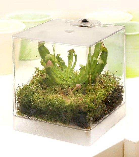 Swampworld® Mini Terrarium - Verlichting - Vleesetende Plant - Papegaaibekplant