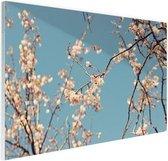 Bloesem Glas 180x120 cm - Foto print op Glas (Plexiglas wanddecoratie) XXL / Groot formaat!