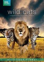 Dvd - Bbc Earth Wild Cats Box