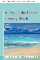 A Day in the Life of a Sandy Beach