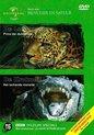 Leopard & Crocodile (D)
