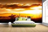Kangoeroe bij zonsondergang Fotobehang 380x265