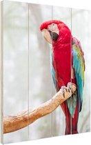 Rode ara fotoafdruk Hout 40x60 cm - Foto print op Hout (Wanddecoratie)