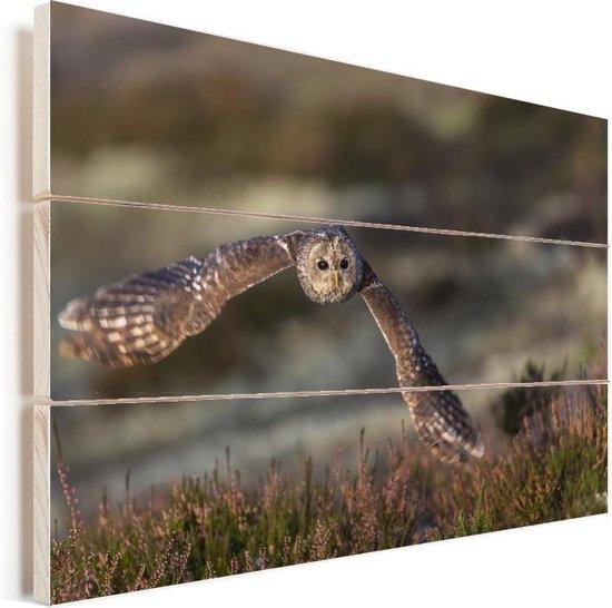Oeraluil vliegt laag over de heide Vurenhout met planken 30x20 cm - klein - Foto print op Hout (Wanddecoratie)