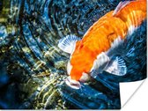Koi karper die naar het wateroppervlak komt poster 80x60 cm - Foto print op Poster  /