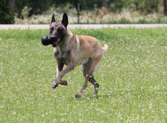 Kong Extreme - Hondenspeeltje - Zwart - XXL - 15,2 cm - Speeltje voor honden