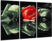 Glasschilderij Roos | Rood, Groen, Zwart | 120x80cm 3Luik | Foto print op Glas |  F003842