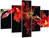 Glasschilderij Art   Rood, Zwart   100x70cm 5Luik   Foto print op Glas    F005587