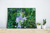 Repelsteeltje in bloei Canvas 40x30 cm - klein - Foto print op Canvas schilderij (Wanddecoratie woonkamer / slaapkamer)