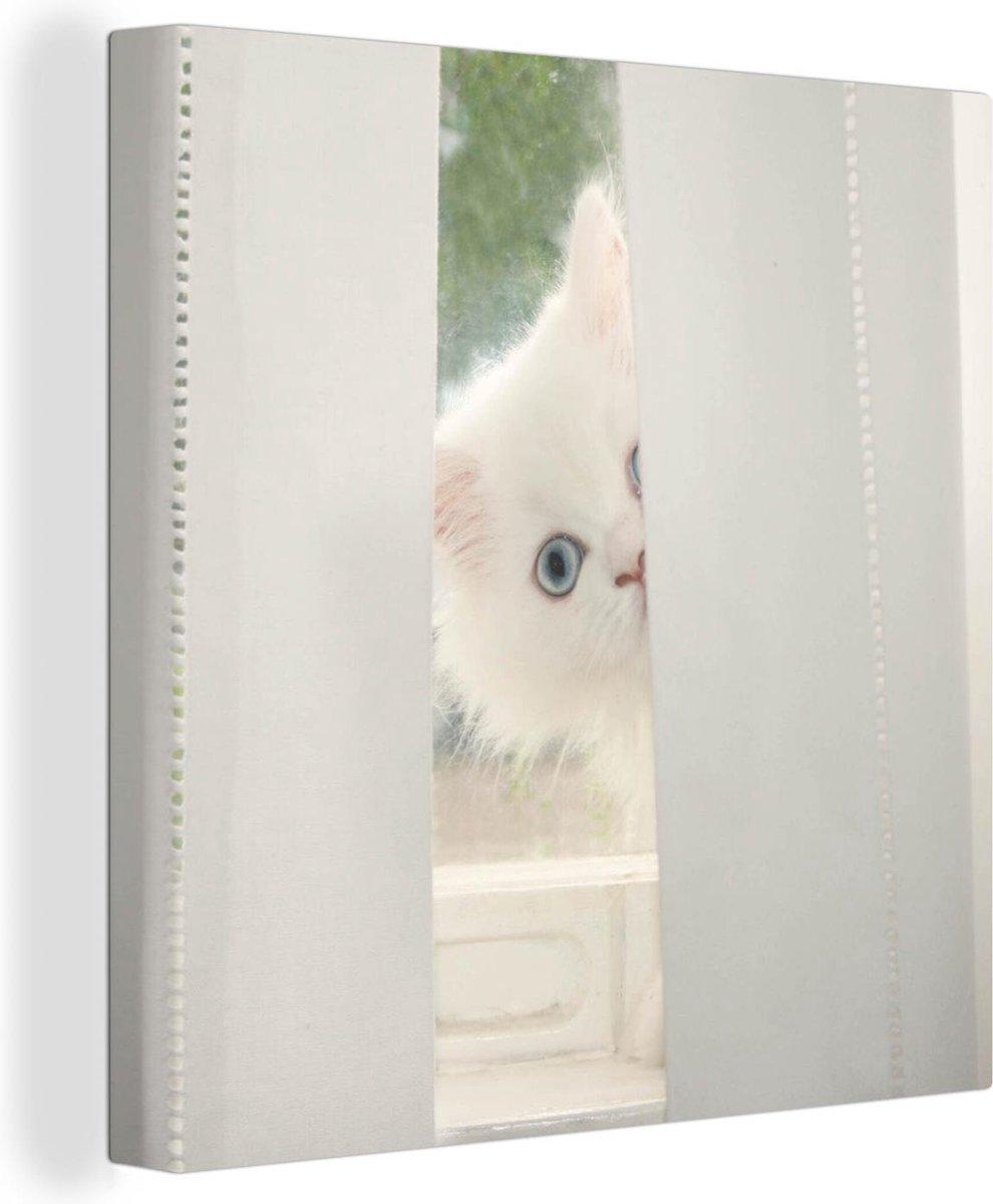 Witte Perzische kat met blauwe ogen kijkt door het gordijn Canvas 90x90 cm - Foto print op Canvas schilderij (Wanddecoratie woonkamer / slaapkamer) / Huisdieren Canvas Schilderijen