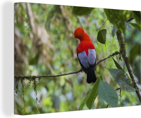 Rode rotshaan op een takje in het bos Canvas 120x80 cm - Foto print op Canvas schilderij (Wanddecoratie woonkamer / slaapkamer)