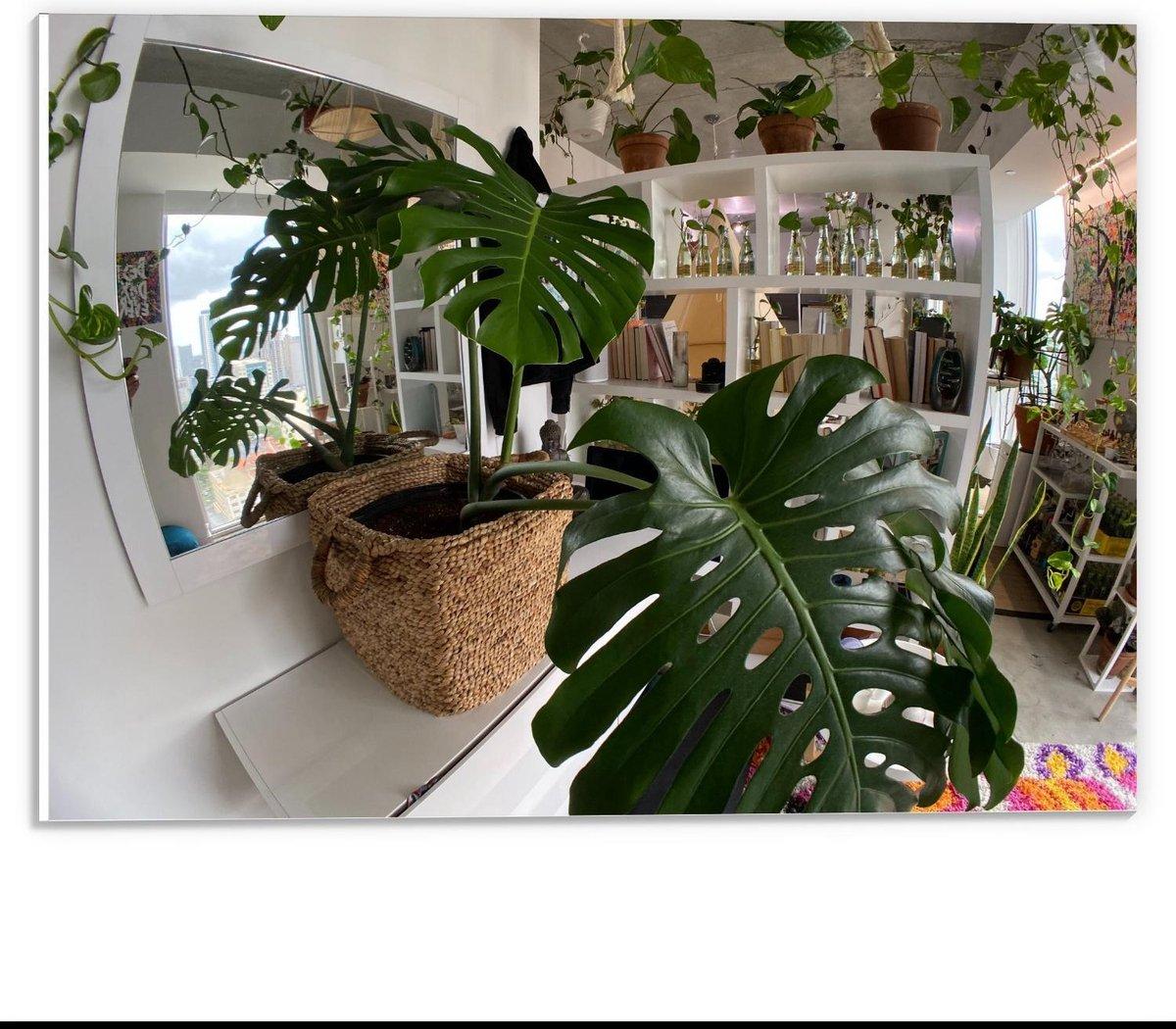 Forex - Woning gevuld met Planten - 40x30cm Foto op Forex