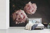 Fotobehang vinyl - Uitgebloeide roze pioenrozen breedte 360 cm x hoogte 240 cm - Foto print op behang (in 7 formaten beschikbaar)