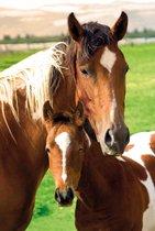 Paard met veulen in weiland poster 61x91.5cm.