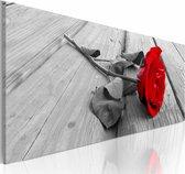 Schilderij - Karmijn roos , grijs