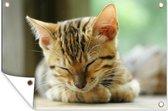 Een slapende kitten tuinposter 60x40 cm - klein - Tuindoek / Buitencanvas / Schilderijen voor buiten (tuin decoratie)