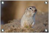 Tuinposter –Ruikende Witte Hamster– 60x40 Foto op Tuinposter (wanddecoratie voor buiten en binnen)