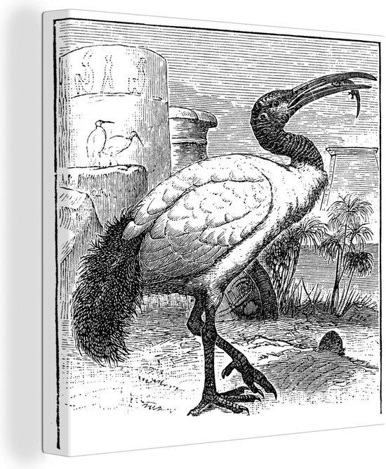 Zwart-wit illustratie van een ibis die aan het eten is 30x40 cm - klein - Foto print op Canvas schilderij (Wanddecoratie woonkamer / slaapkamer)