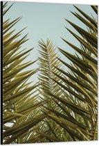 Dibond –Palmbladeren Close Up – 30x40 Foto op Aluminium (met ophang)