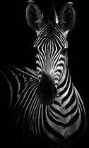 Zebra op Canvas | Staand 60 x 90 cm | Dieren schilderijen | Kwaliteit wanddecoratie | Canvasdoek