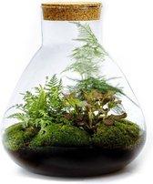Growing Concepts Erlenmeyer Large terrarium - Botanisch 34cm / 28cm / Glas - Terrarium: Corks, terrarium