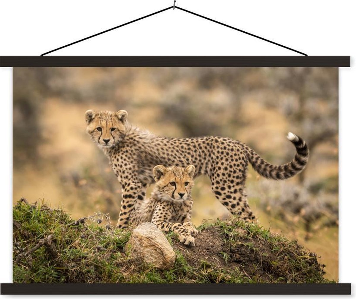 Luipaarden in de natuur textielposter latten zwart 120x80 cm - Foto print op schoolplaat (wanddecoratie woonkamer/slaapkamer)