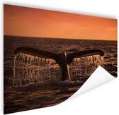 Walvisstaart bij zonsondergang Poster 90x60 cm - Foto print op Poster (wanddecoratie)