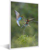 Foto in lijst - Twee gekleurde Bijeneters vliegen rond fotolijst wit 40x60 cm - Poster in lijst (Wanddecoratie woonkamer / slaapkamer)