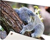 Slapende koala Tuinposter 200x100 cm - Foto op Tuinposter / Schilderijen voor buiten (tuin decoratie)