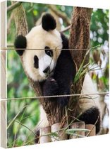 Panda welp Hout 60x40 cm - Foto print op Hout (Wanddecoratie)