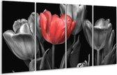 Glasschilderij Tulp   Rood, Grijs, Zwart   160x80cm 4Luik   Foto print op Glas    F003607