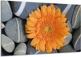 Canvas schilderij Bloem | Oranje, Grijs | 120x70cm 1Luik