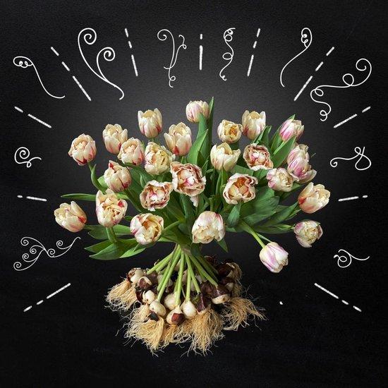 FLAMING MARGARITA – 10 Prachtige gevlamde tulpen met bol by BOLT Amsterdam - Exclusieve kwaliteit - Een origineel cadeau & rechtstreeks van de kweker