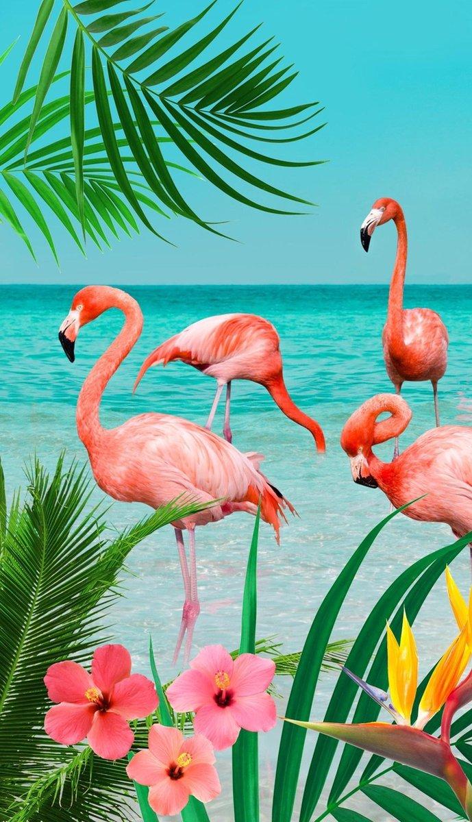 Good Morning Strandlaken Flamingo 100 X 180 Cm Velours