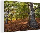 Meerdere kastanjebomen Canvas 120x80 cm - Foto print op Canvas schilderij (Wanddecoratie woonkamer / slaapkamer) / Bomen Canvas Schilderijen