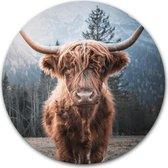 Wandcirkel Schotse hooglander - WallCatcher | Kunststof 80 cm | Ronde schilderijen | Muurcirkel Highlander op Forex | Kwaliteit wanddecoratie