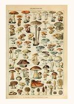 Vintage Poster Champignon Groenten  - Paddenstoelen Natuur Botanisch Millot - Plant & Tuin