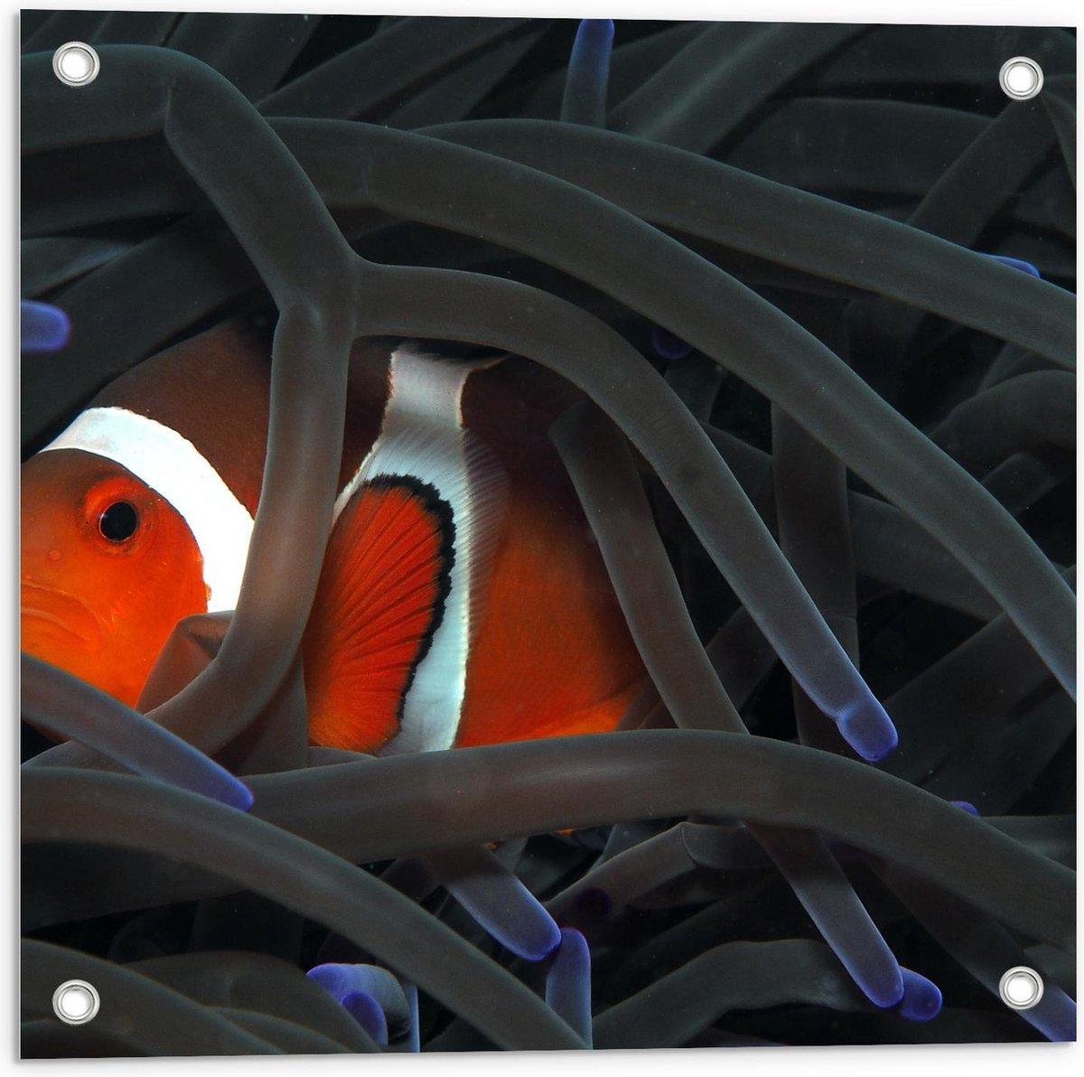 Tuinposter – Booskijkende Vis - 50x50cm Foto op Tuinposter  (wanddecoratie voor buiten en binnen)