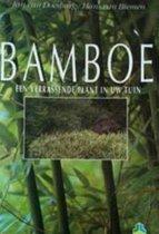 BAMBOE EEN VERRASSENDE PLANT IN UW TUIN