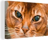 Abessijn kat met prachtige ogen Canvas 180x120 cm - Foto print op Canvas schilderij (Wanddecoratie woonkamer / slaapkamer) / Huisdieren Canvas Schilderijen XXL / Groot formaat!