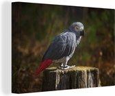 Schitterende grijze roodstaart op afgezaagde boomstam Canvas 120x80 cm - Foto print op Canvas schilderij (Wanddecoratie woonkamer / slaapkamer)