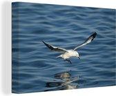 Hartlaubs meeuw vliegt over het water in Zuid-Afrika Canvas 140x90 cm - Foto print op Canvas schilderij (Wanddecoratie woonkamer / slaapkamer)