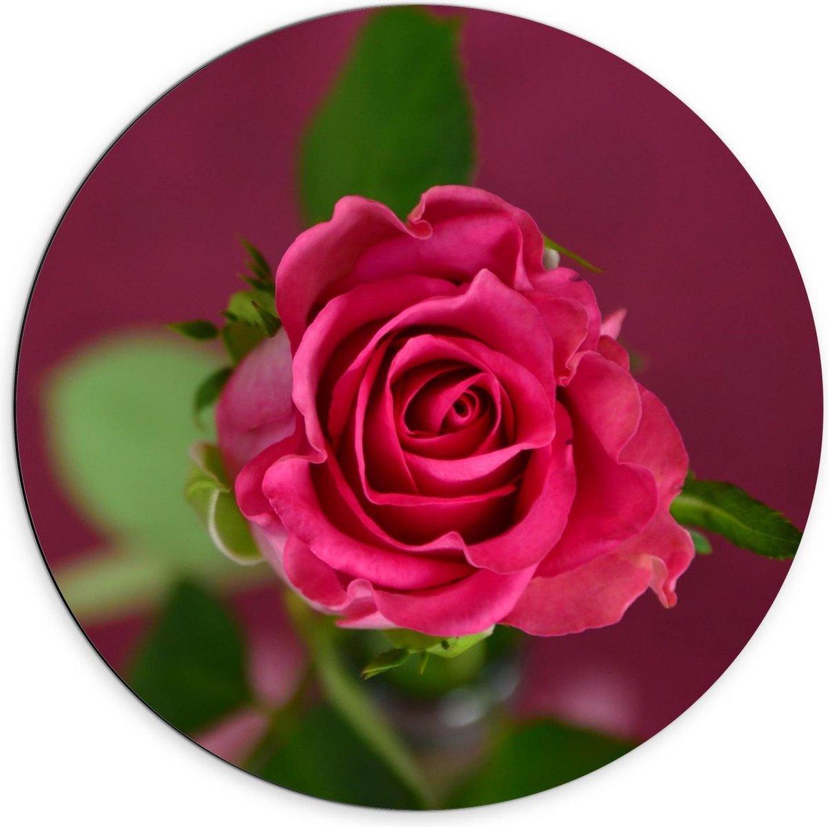 Dibond Wandcirkel - Roze Roos met Groen Blad - 70x70cm Foto op Aluminium Wandcirkel (met ophangsysteem)