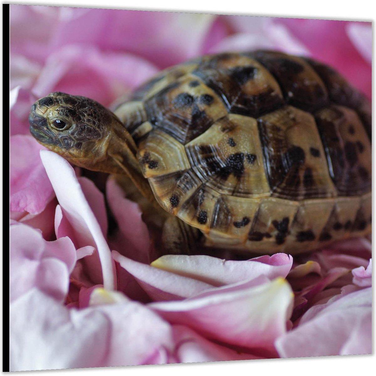 Dibond  Mini Schildpad op Roze Rozenblaadjes  100x100 Foto op Aluminium (Met ophang)