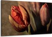 Canvas schilderij Tulp | Groen, Rood | 140x90cm 1Luik